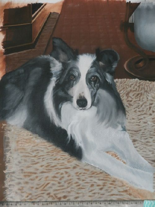 Border-Collie-olieverf